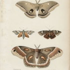 Moths Pl. 44