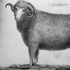 Merino sheep born in 1808 at Clermont