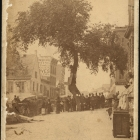 The Old Elm Tree, Albany